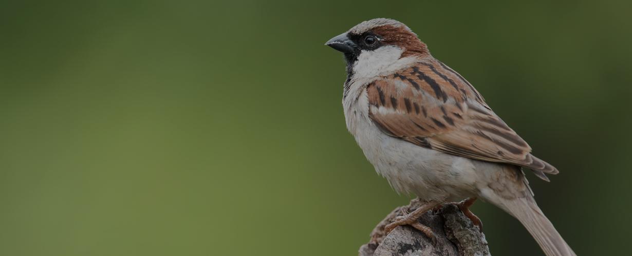 bird-removal-richmond-virginia1