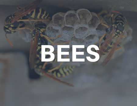 bee removal services