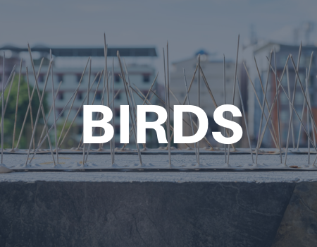 bird removal services